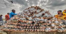ইলিশ উৎপাদন বাড়াতে ২৪৬ কোটি টাকার প্রকল্প আসছে