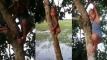 এক বছর বয়সী শিশুর গাছে ওঠা-নামার ভিডিও দেখে অবাক নেটদুনিয়া