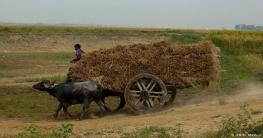 বাংলাদেশ থেকে কৃষিশ্রমিক নিন