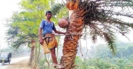 খেজুর রস বিক্রিতে স্বাবলম্বী সোনাগাজীর গাছিরা