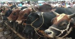 পাকিস্তানকে ছাড়িয়ে বিশ্বের সবচেয়ে বেশি পশু কোরবানি বাংলাদেশে
