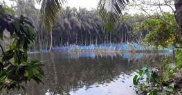 লক্ষ্মীপুরে ৩০ হাজার হেক্টর জমিতে জলাবদ্ধতা